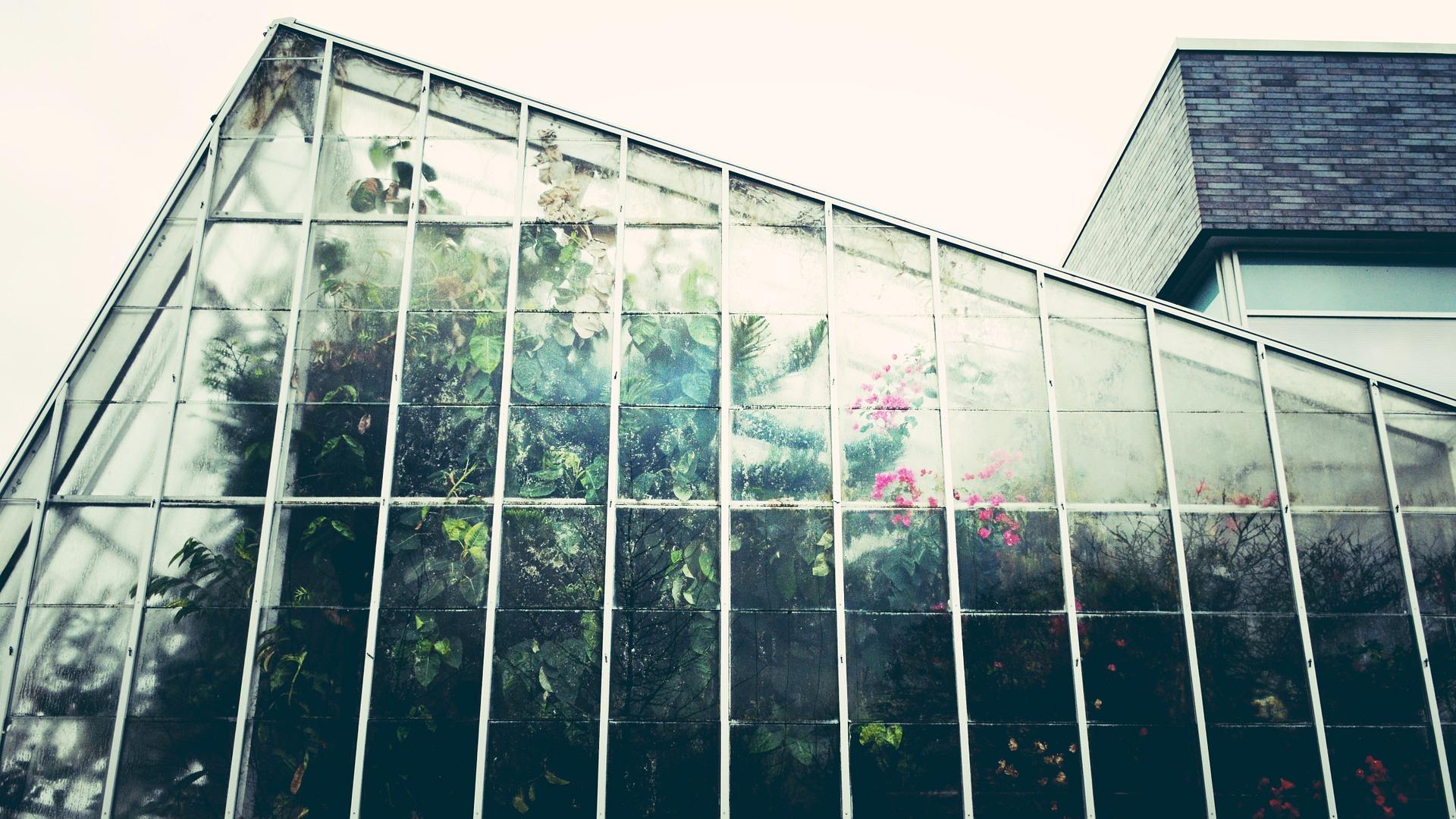 Une verranda avec des plantes